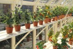Royale Reach Ivory Greenhouse