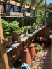 Denstone Greenhouse