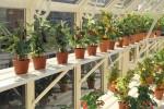 Regatta Ivory Greenhouse
